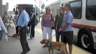 Service Animal Training In Orange County