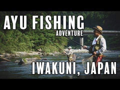 Japanese Ayu River Fishing!
