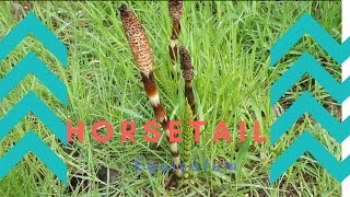 Season 2 Episode 1: Horsetail and Yellow Skunk Cabbage