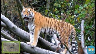 أسماء حيوانات الغابة وأصواتها باللغة العربية - أسماء الحيوانات - أصوات الحيوانات - حيوانات الغابة