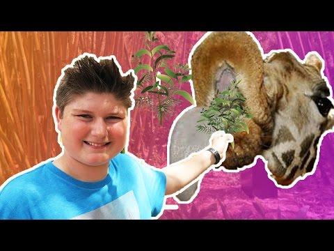 THE GIRAFFE HAD A BABY! | JACKSONVILLE ZOO