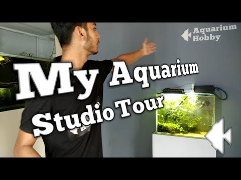 Aquarium Studio Tour