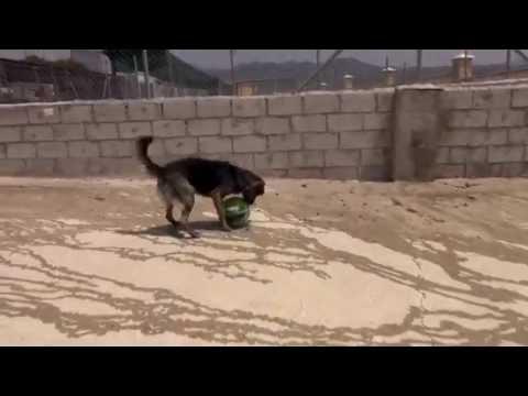 Visita a la protectora de animales de m laga youtube for Protectora de animales malaga ciudad jardin