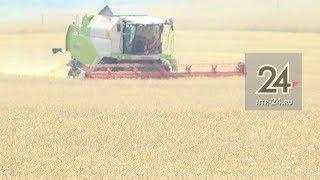 В Нижнекамском районе 54 комбайна приступили к уборке урожая