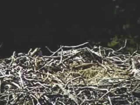 Pelican Harbor nest exchange 6:56 Pm ... k26 relieves k10