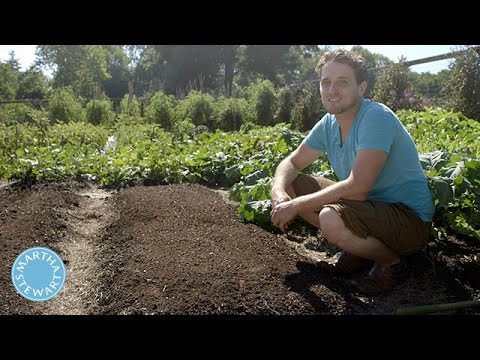 Tips for Planting Vegetables in Late Summer - Martha Stewart