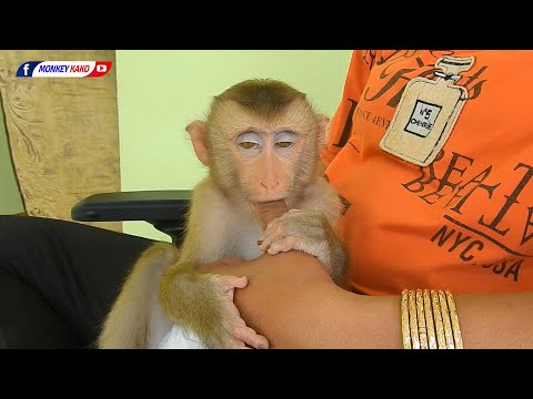 Funny Animals, Baby Monkey LUNA Love MOM Finger Before Sleep