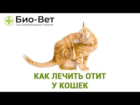 Как Лечить Отит У Кошек & Топ-5 Причин Появления Отита У Кошек. Ветклиника Био-Вет