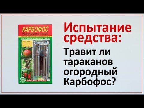 Испытание средства: эффективен ли Карбофос от тараканов?