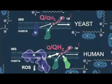 bioessays evolution of peroxisomes illustrates symbiogenesis  bioessays evolution of peroxisomes illustrates symbiogenesis