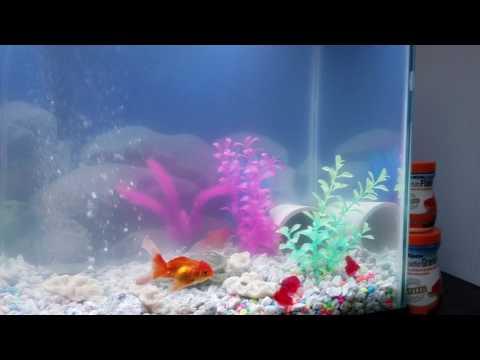Pleco Aka Sucker Catfish Back From The DEAD * Jumper Plecostomus *
