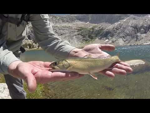 Brook Trout Fishing Young Lakes, Yosemite National Park, Fall 2016