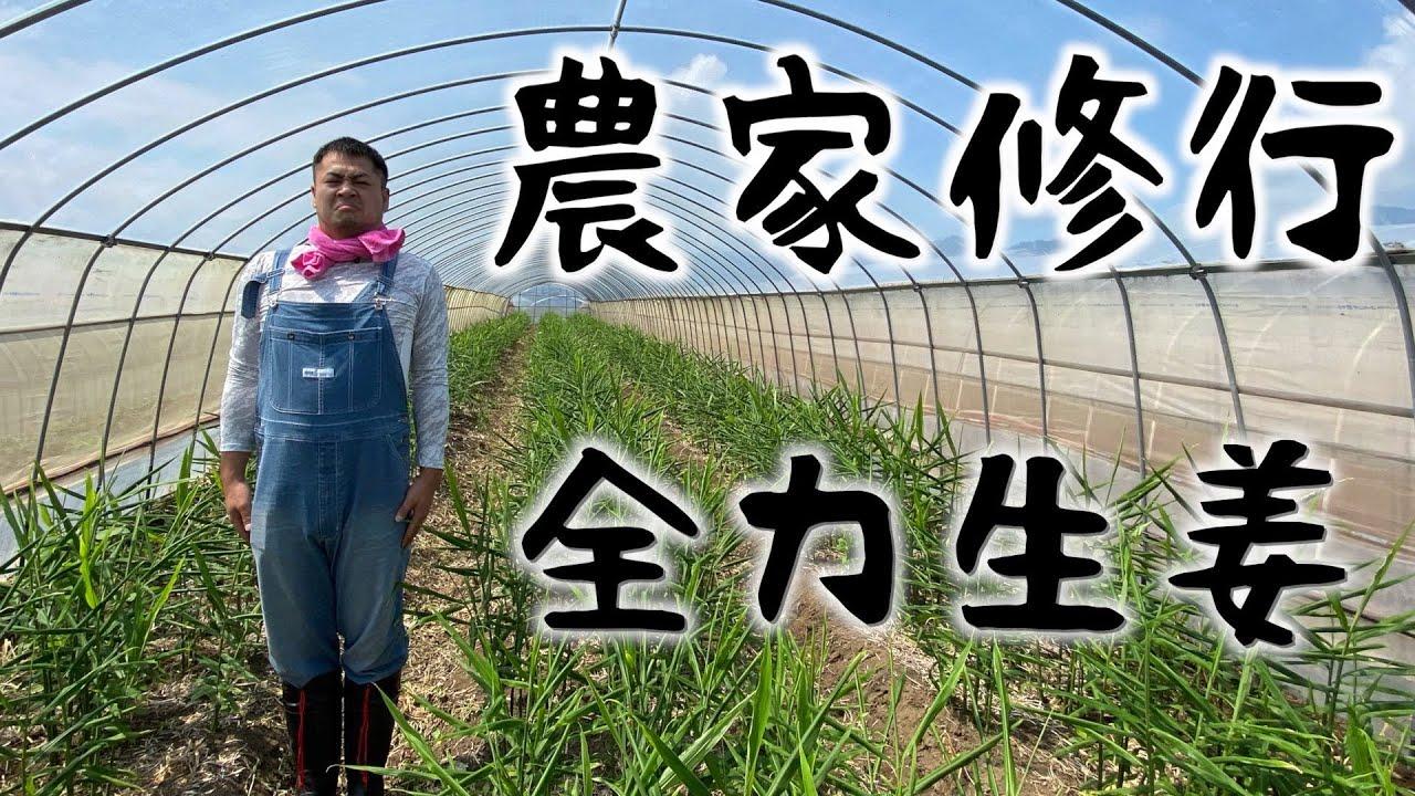 【新企画】セブ家族やす農家修行始めました