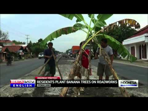 Central Java Villagers Plant Banana Trees in Road to Protest Lack of Road Signs