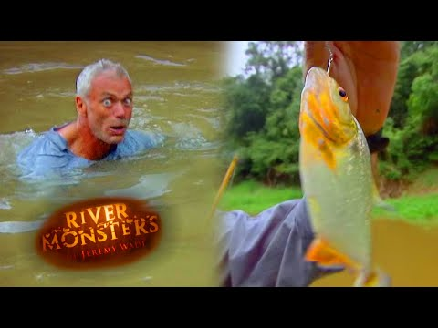 Jeremy Wade Jumps Into Piranha Infested Waters! | PIRANHA | River Monsters
