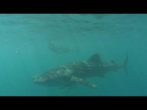the underwater world life