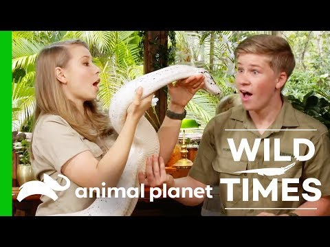 Mischievous Meerkats And An Amazing White Python! | Wild Times