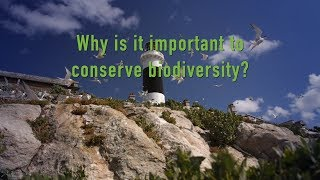 Why is it important to conserve Biodiversity?