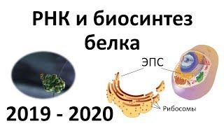 4. РНК и синтез белка (9 или 10-11 класс) - биология, подготовка к ЕГЭ и ОГЭ 2020