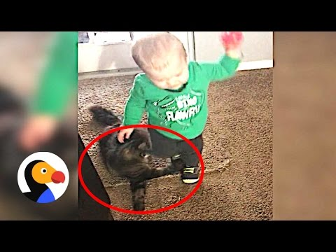 Cats Being Jerks The Dodo YouTube - 32 animals complete jerks