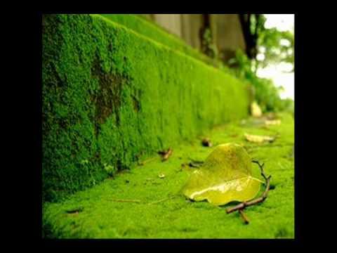 cỏ xanh  Nguyên Khang [designed by Hàng Châu]