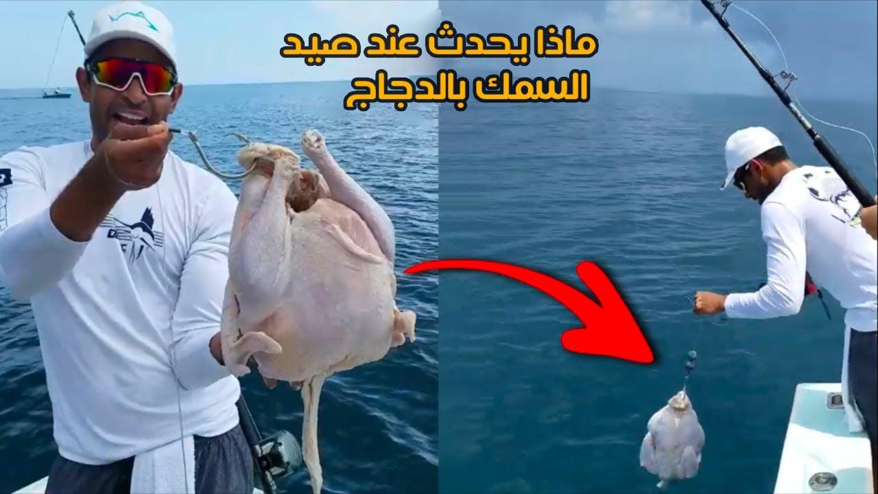 ما الذي يحدث عند استخدامك دجاجة كطعم للصيد !!