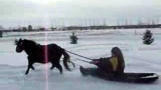 Miniature Horse Pulling Sleigh