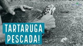 Tartarugas marinhas na Praia Vermelha: da beleza às ameaças