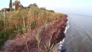 Чайка на берегу моря  Хорлы  Херсонская область  Украина