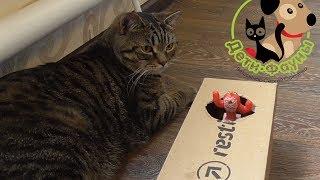 Как сделать игрушку для кота своими руками
