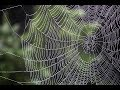 MEANING OF SEEING A SPIDER IN DREAM - YouTube
