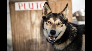 Idaho woman finds joy racing sled dogs with family