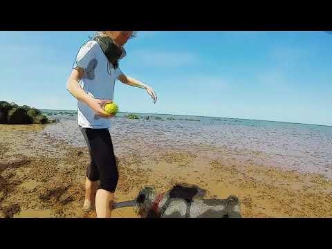 Slow motion wet dog shaking cartoon style
