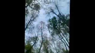 Vlog:Лес,прогулка с собакой/Габи/;)