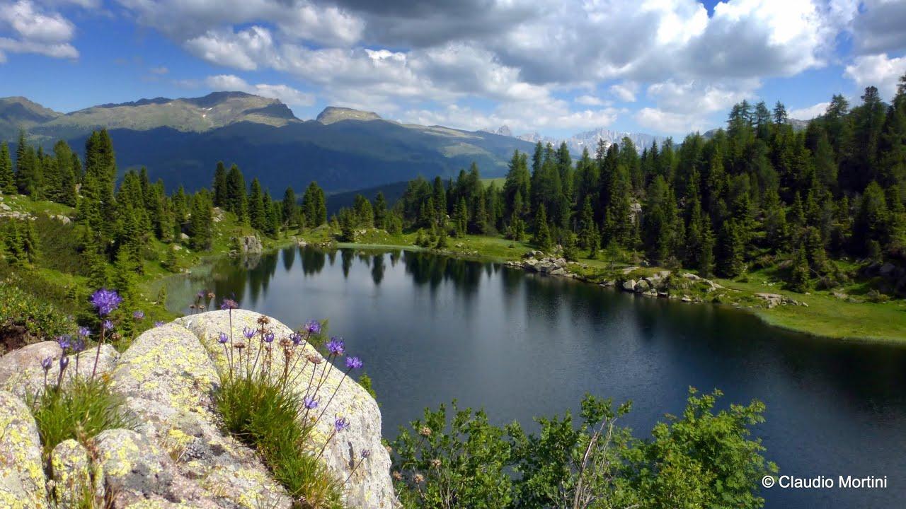 TRENTINO  LA MAGICA FIORITURA ALPINA  The landscapes of