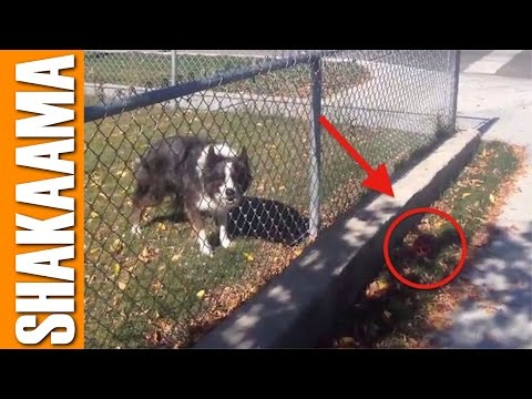 TALKING DOG PRANKS OWNER