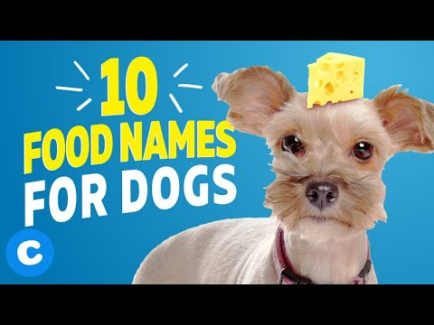 10 Cute Food Names for Dogs