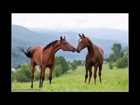 Специальные проекты по защите животных