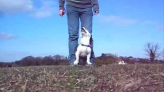 Dog Tricks With Ernie, Indi, Lola & Max