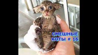 Приколы с кошками и котами #16. Подборка смешных и интересных видео с котиками и кошечками 2017