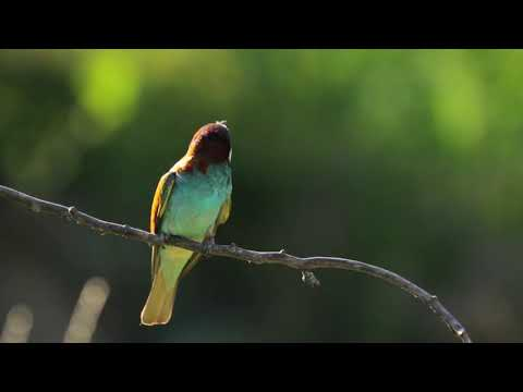 3 Hours of Relaxing Music for Meditation (2020) 🛏 Deep Sleep Music for the Soul 🌙 Nature Music 🐦