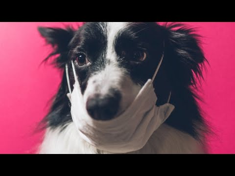 Pets CAN Spread Infections to individuals