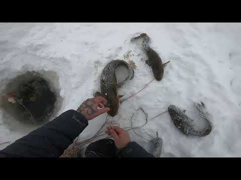 Отчёт с рыбалки 17.01.2020