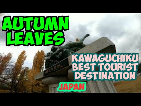 AUTUMN LEAVES/ONE OF THE BEST TOURIST SPOTS IN JAPAN/THIS SEASON&VINTAGE COLLECTION AT HAPPY DAYS