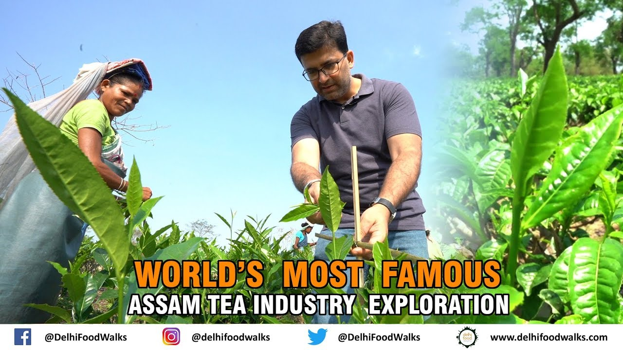 Download World's Most Famous Assam Tea Industry Explorations