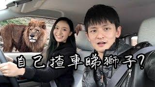自己揸車睇獅子? 【九州自然野生動物園】#4