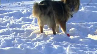 девки зимой пытаются заставить бродячих собак сняться в фильме