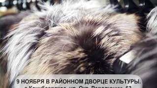 Рекламный ролик (2 вариант, 4:3)