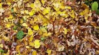 Using Leaf Mulch on The Garden and Compost
