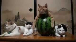 Смешные кошки смешат людей смотреть видео про кошекmp4